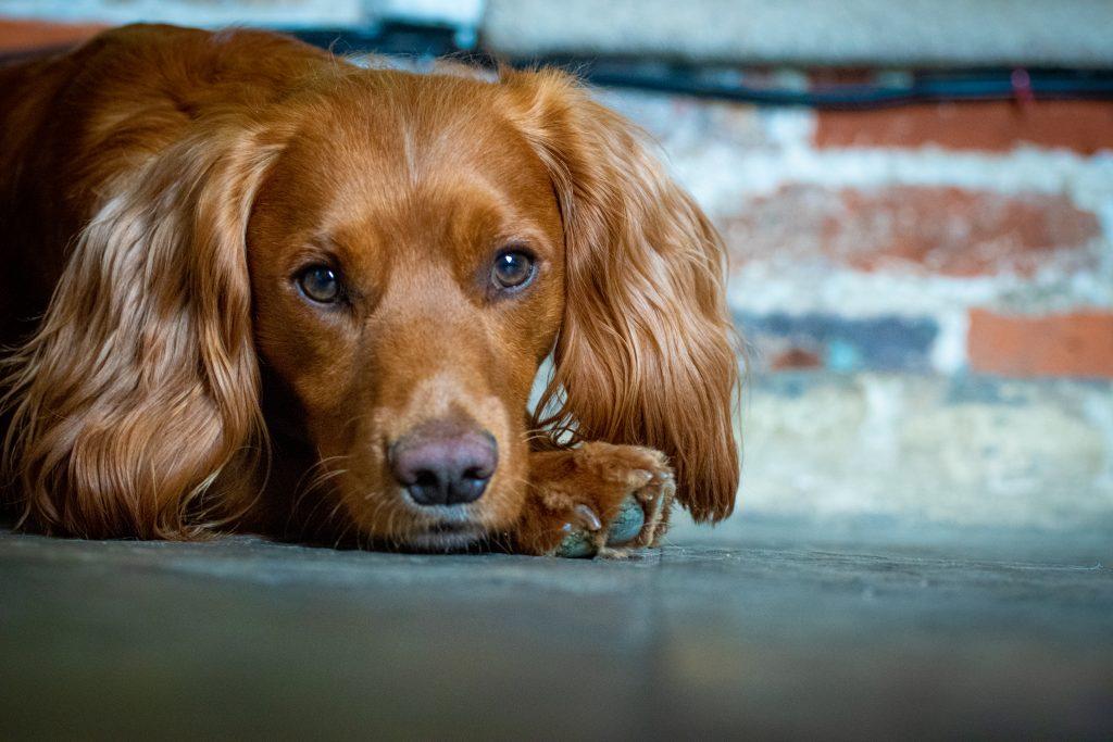 Dog photography suffolk