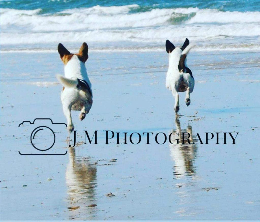 jack russells, beach, dog photo shoot, canine photography