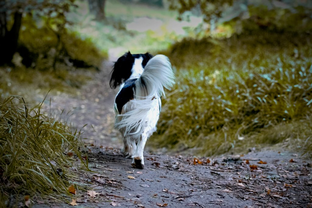 Pet photography, I'm going on an adventure, cocker spaniel, Jack russell, adventure time
