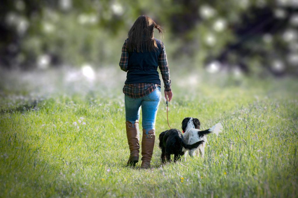 dog walking, pet photoshoot,