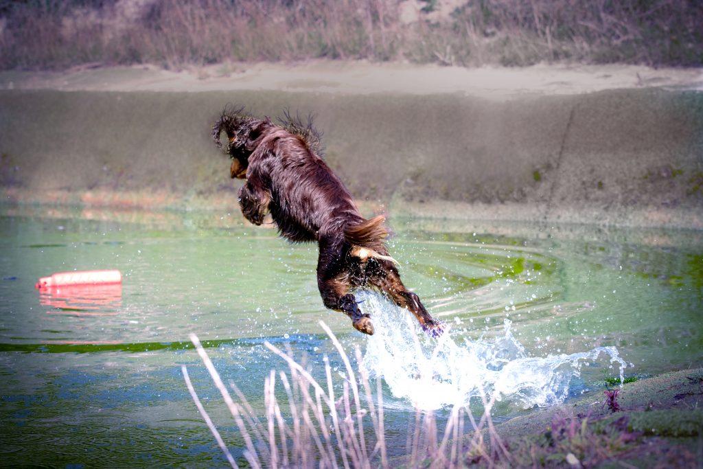gundog training, water dummy, jump, leap of faith, event photography