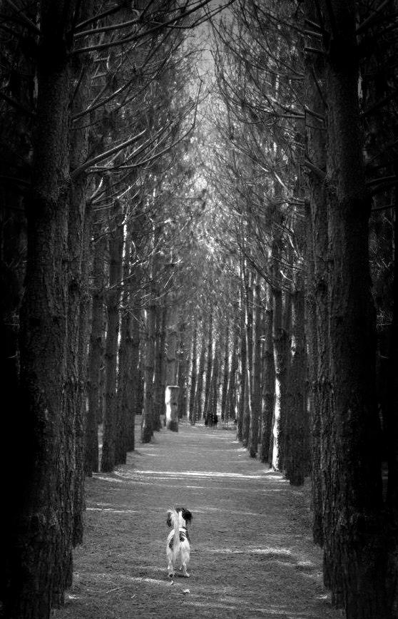 Forest dog walks
