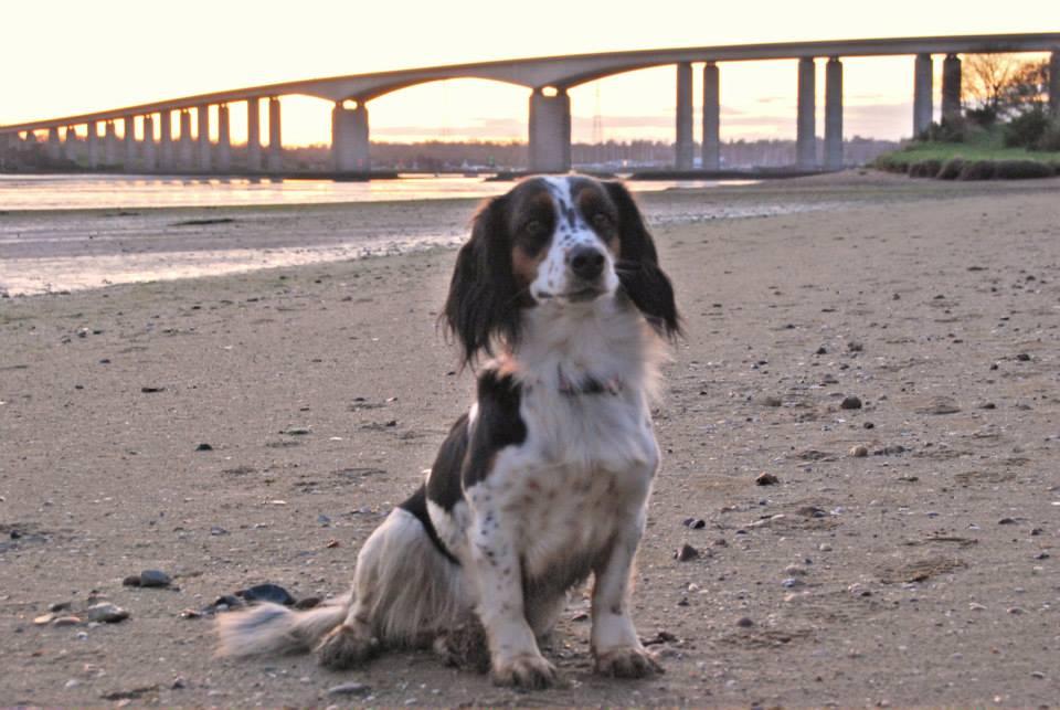 Riverside walks in Suffolk