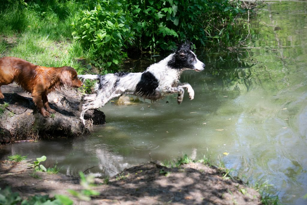 River dog walks