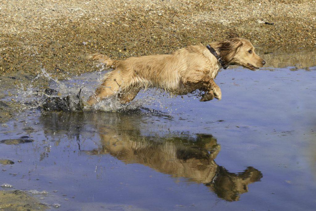 Coastal dog walks in suffolk