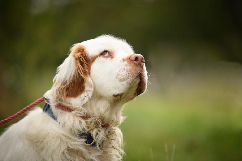 candid dog side eye